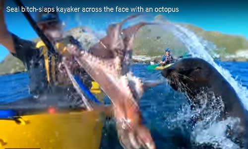 Seal Slaps Kayaker